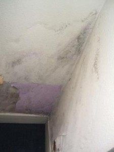 Preventing damp and condensation in rented properties